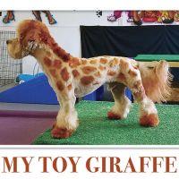 My Toy Giraffe