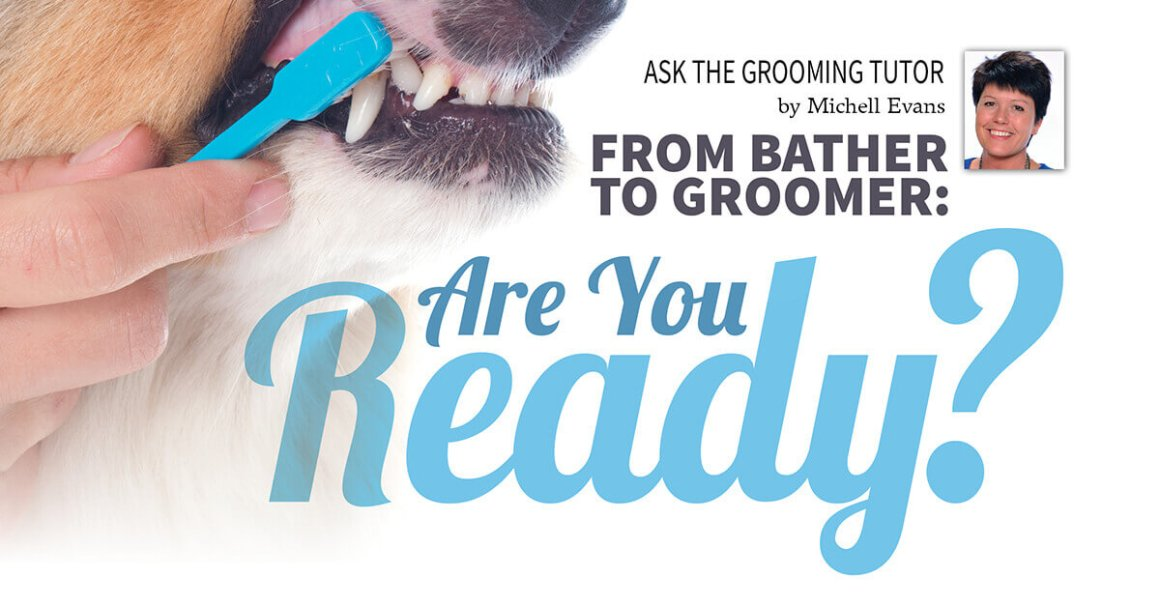 From Bather to Groomer: Are You Ready?