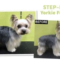 Step-By-Step Yorkie Fusion Trim
