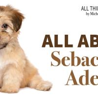 All About Sebaceous Adenitis