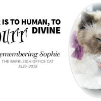 The Err Is to Human, to Purr Divine