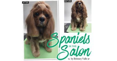Spaniels in the Salon