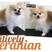 Positively Pomeranian