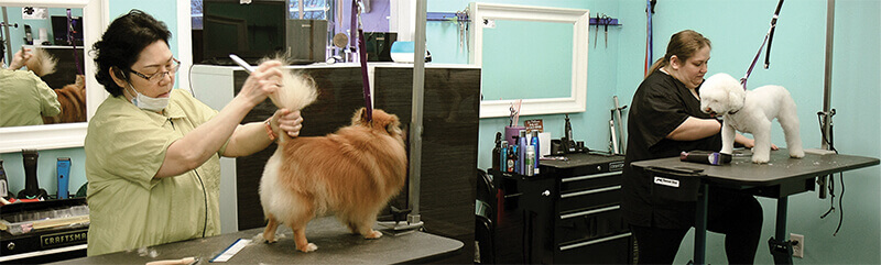 two dog groomers grooming two dogs side by side