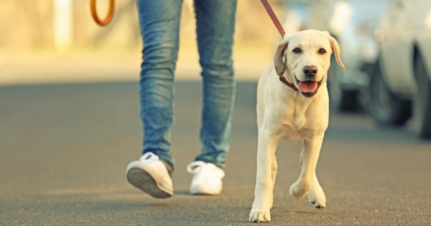 promenade chien