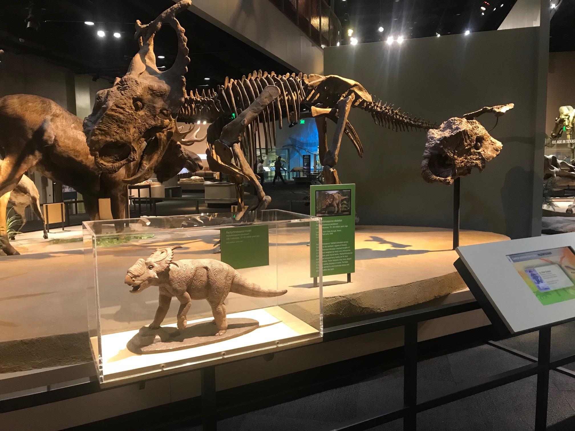 Pachyrhinosaurus perotorum Snapchat AR Lens Perot Museum