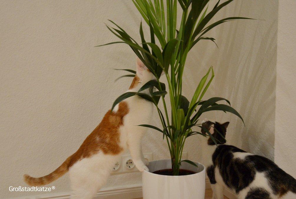 Ungiftige Zimmerpflanzen fr Katzen  Ungifte Pflanzen Wohnung Katze