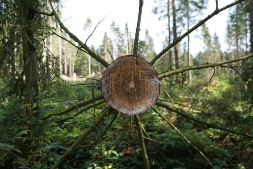 """Hanno Groth wandert durch den Harz   Jetzt in unserer neuen Reihe """"Abenteuer""""   Foto: Hanno Groth   GROSS∆RTIG"""