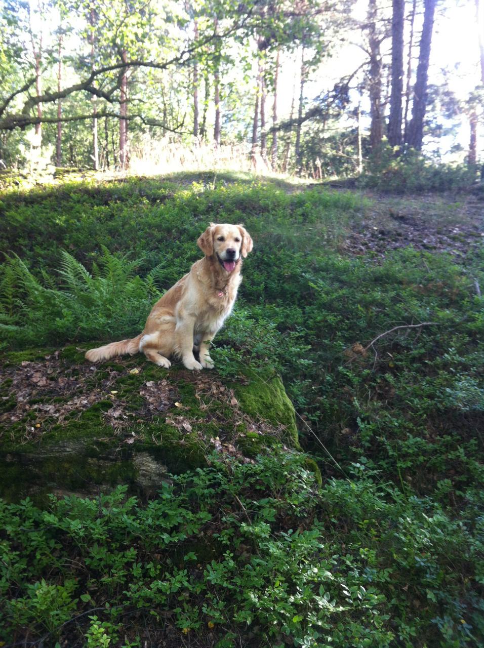 en hund ute i skogen