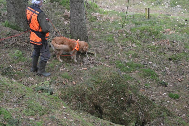 hund som hittar klöven