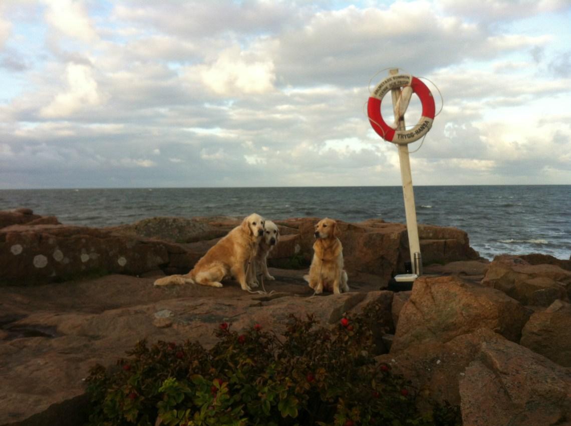 tre hundar vid havet