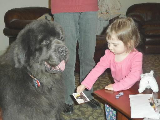 Newfoundland Dog Comforts Children at Ronald McDonald