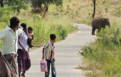 Wildlife Conservation Placement in Sri Lanka