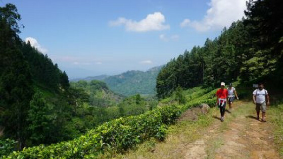 Trekking in Knuckles National Park, Sri Lanka
