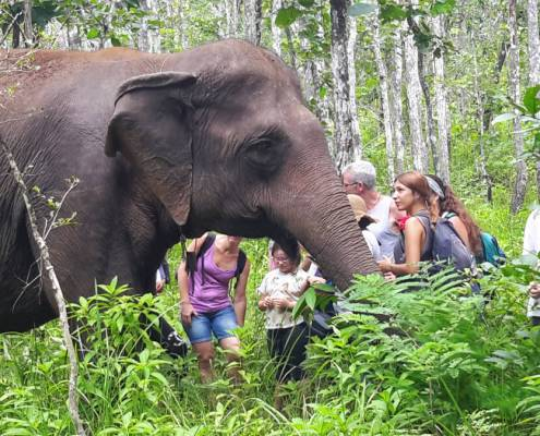 Trekking in Mondulkiri National Park Cambodia
