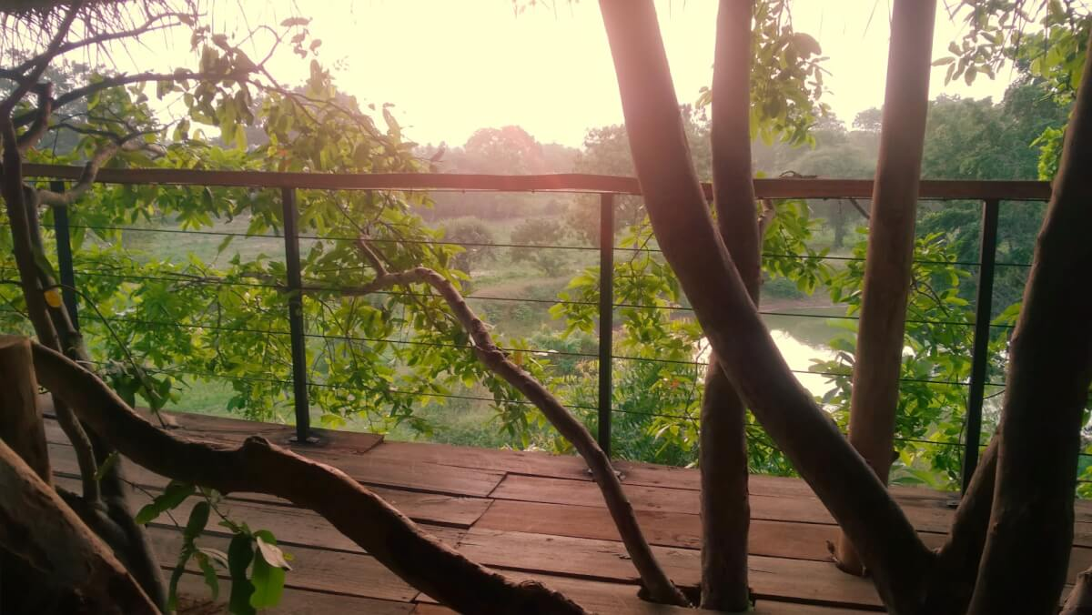Morning view from the tree house suite