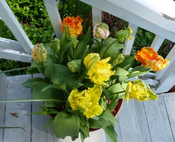 Multi colored Parrot Tulips 1024x836 Spring Has Sprung   at last!