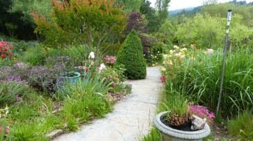 HF Dwarf Alberta Cypress 1024x575 360 Degrees Of Perfection in Hans Fahdens Garden