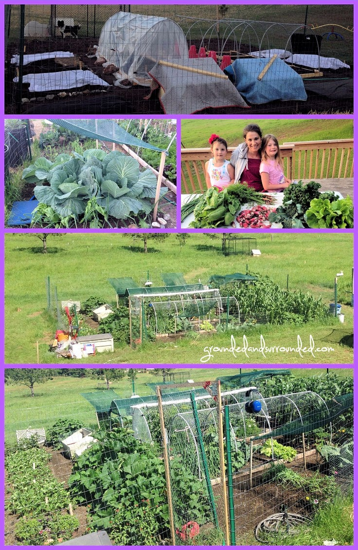 Vegetable Garden Idea I have often wished that more gardeners shared their large vegetable garden  plans online. This