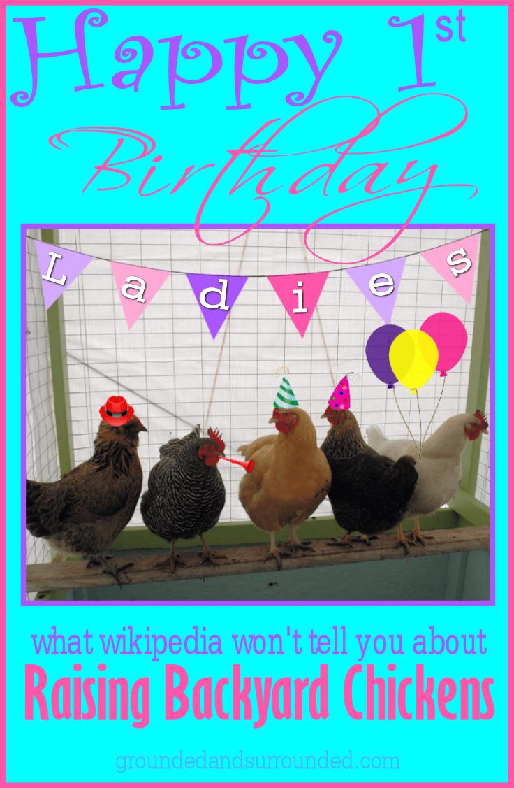 what wikipedia won u0027t tell you about raising backyard chickens
