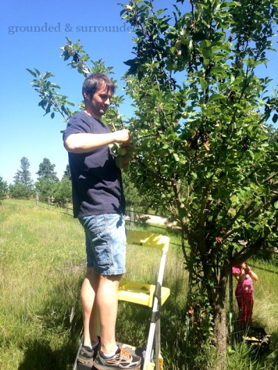 Ever since we decided to embrace country living, I have been dreaming of my very own orchard. But for now we are foraging for free fruit and learning how to preserve the bounty! You will also find my gluten-free healthy apple crisp recipe! https://www.groundedandsurrounded.com/recipe/i-dream-of-an-orchard/