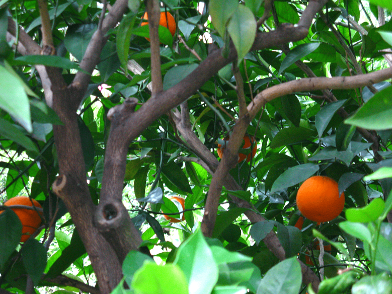 The How-Tos of Fruit Gardening   Want to grow your own organic fruit and berries but don't know where to start? Find all the helpful tips and ideas you need in this article whether you are planting in a beautiful container or small backyard. Find ideas for apple orchard design, strawberry planting, and see how much easier it can be to grow fruit than vegetables. #DIY #plants #yards