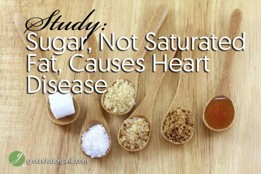 sugar not saturated fat causes heart disease