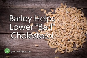 "Study: Barley Helps Lower ""Bad"" Cholesterol"