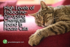 High Levels of Endocrine-Disrupting Chemicals Found in House Cats