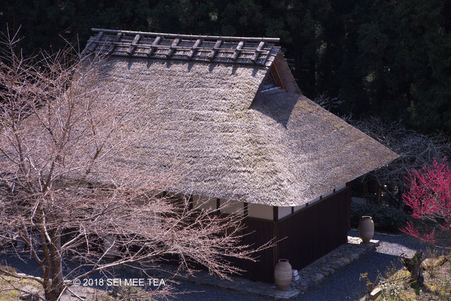 Gyokuro vs. Fukamushi Sencha ~ two trendy Japanese teas