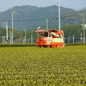 Tea farming operated by machine in Japan
