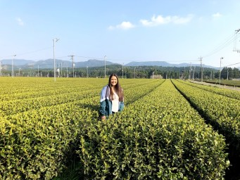 Kana in tea field