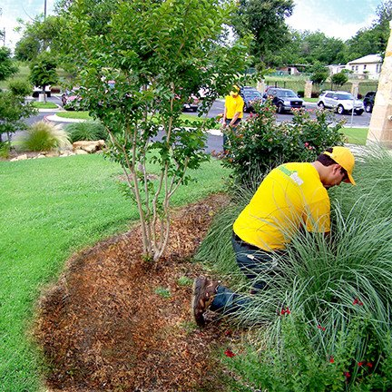 lawn care & landscaping grounds