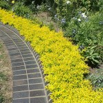 20 Great Ideas For The Best Front Yard Landscaping At Your Orlando Fl Home