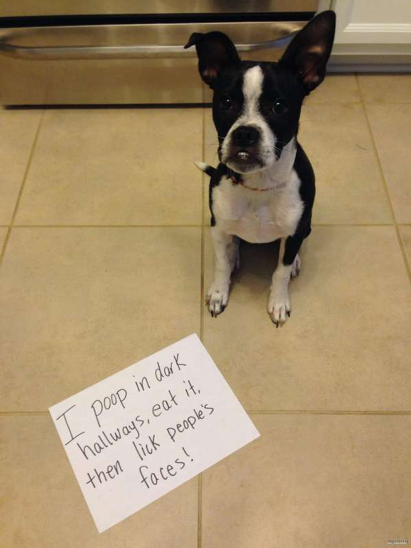 My Cute Name Wallpaper You Will Die Laughing After Seeing These Dog Shaming Pics