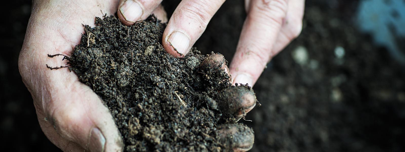 Farmer hands in the earth