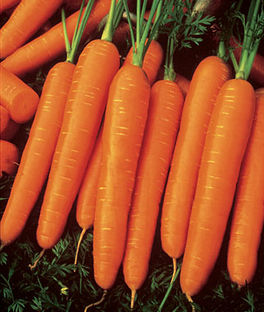 Vegetable Garden In Fall Wallpaper Carrot Varieties Varieties Of Carrots Types Of Carrots