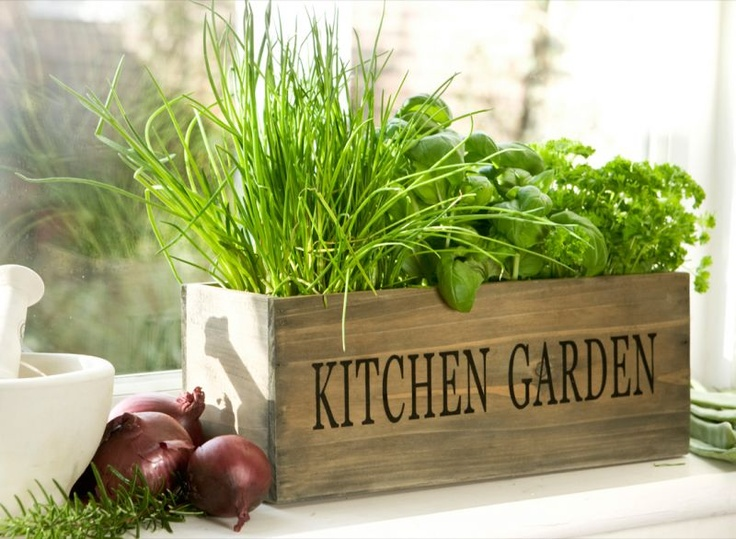 5 Tips For Kitchen Gardening The Purple Turtles