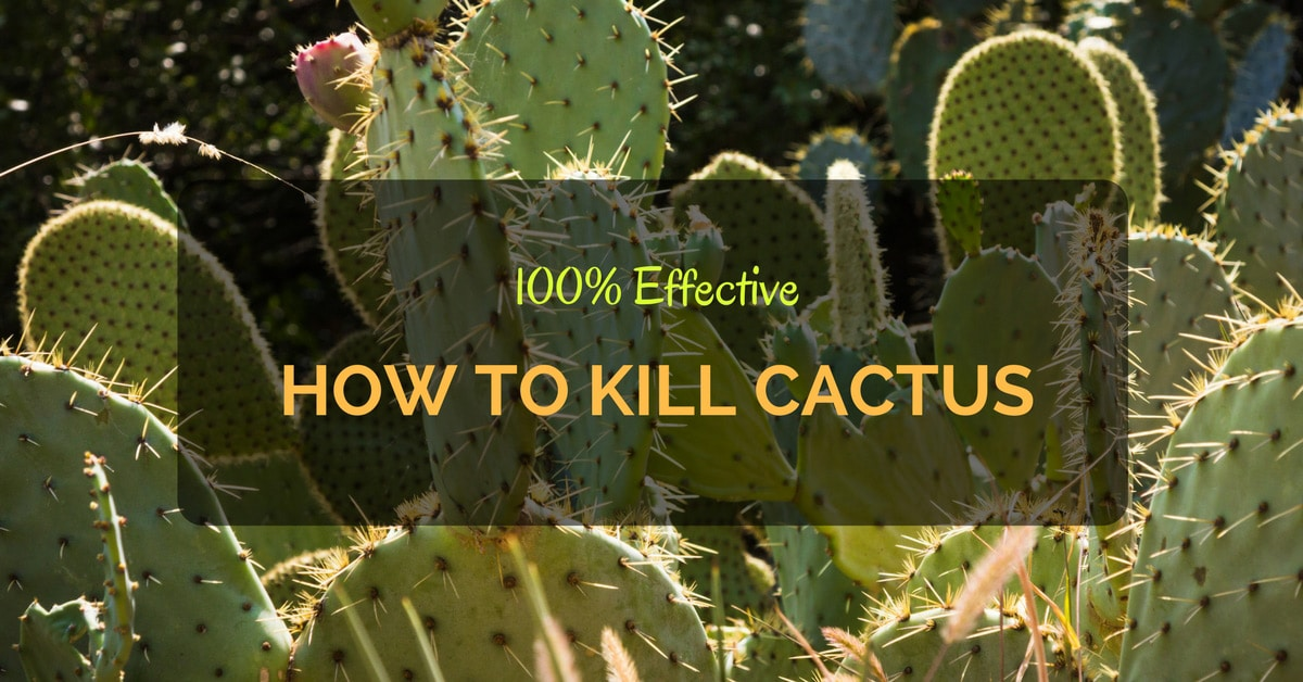 How to Kill Cactus - 100% Effective