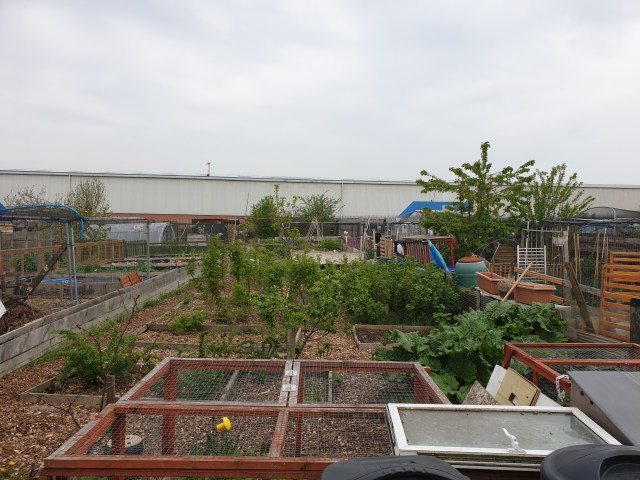 View of allotment from my shed