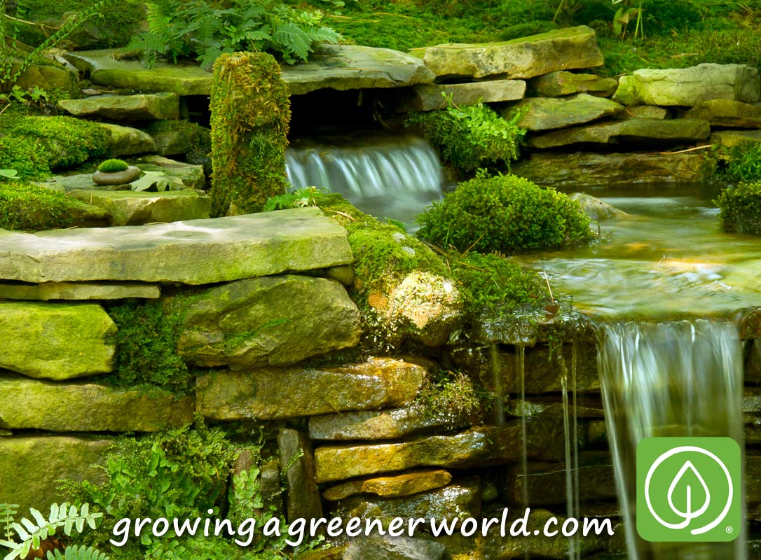 Episode 319 Moss Gardens Growing A Greener World®