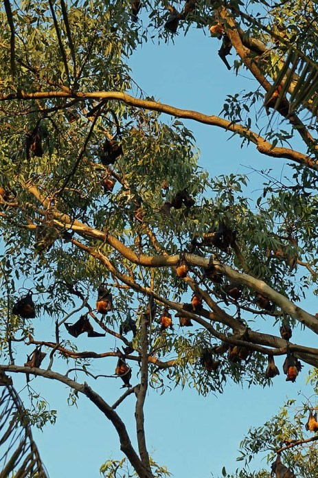 The Bat Tree