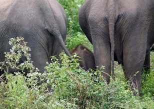 Elephant bottoms