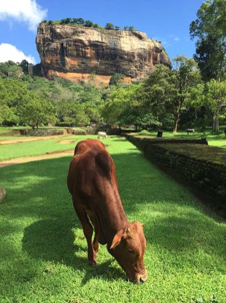Sigiriya lawnmower