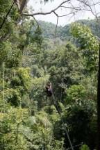 Gibbon Experience