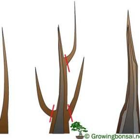 cutgrowcut