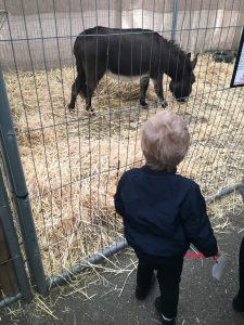 baby bear loved the donkeys