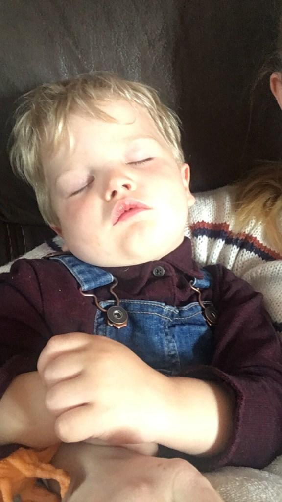 Sleeping Baby bear.