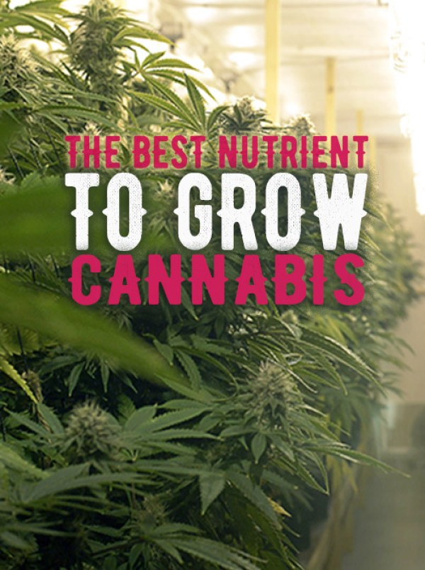 The best nutrient to grow weed