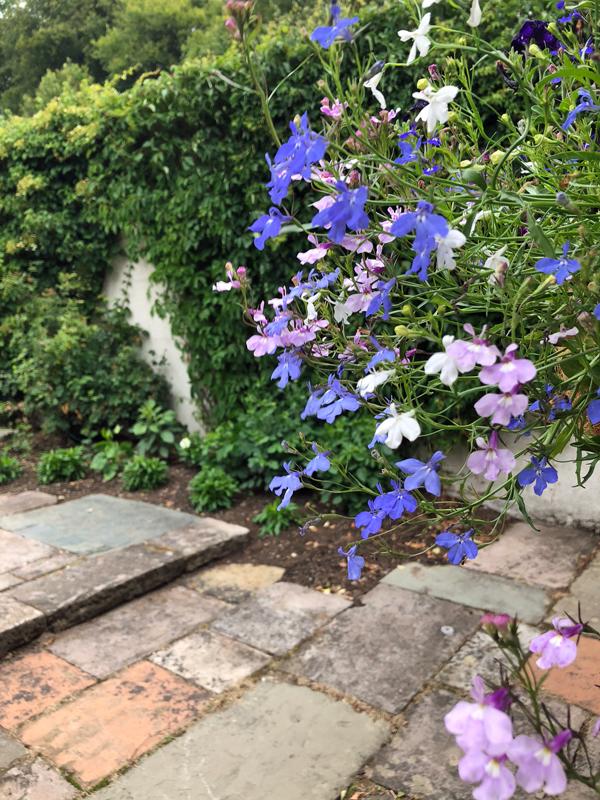1-a-very-green-cutting-flower-garden